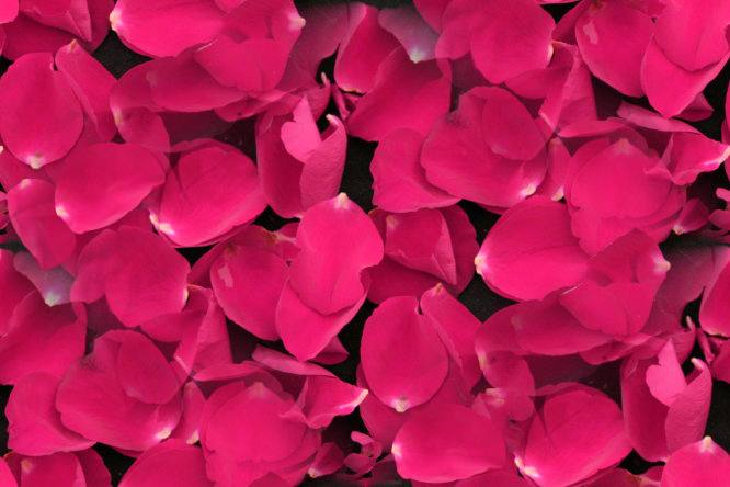 Pink rose petals on black seamless repeating background fill
