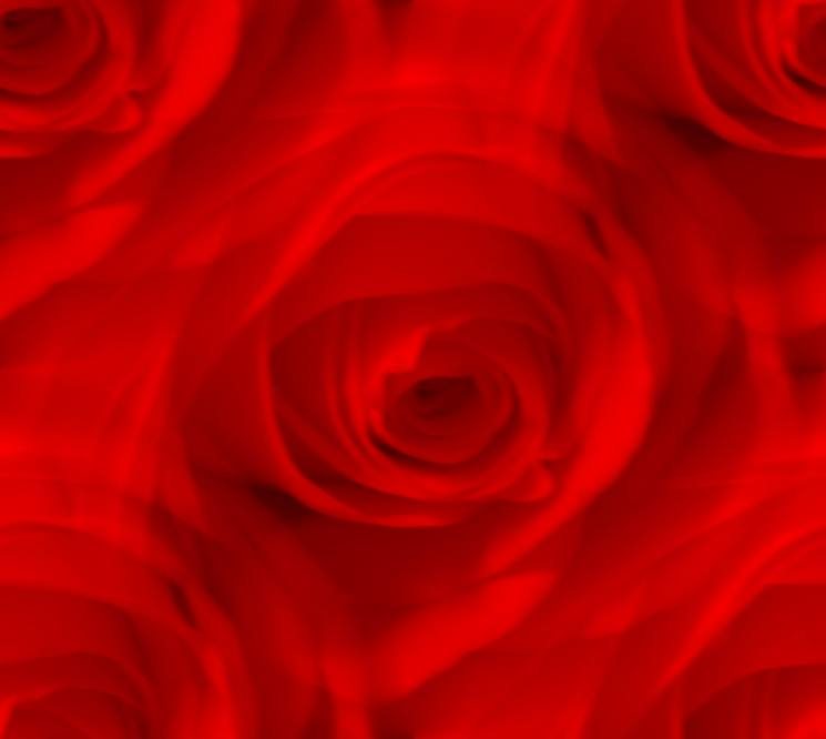 Red rose large dreamy seamless texture