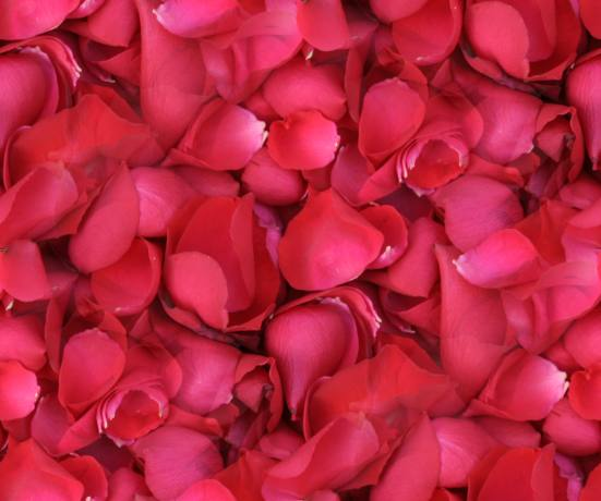 Red rose petals seamless repeating background fill