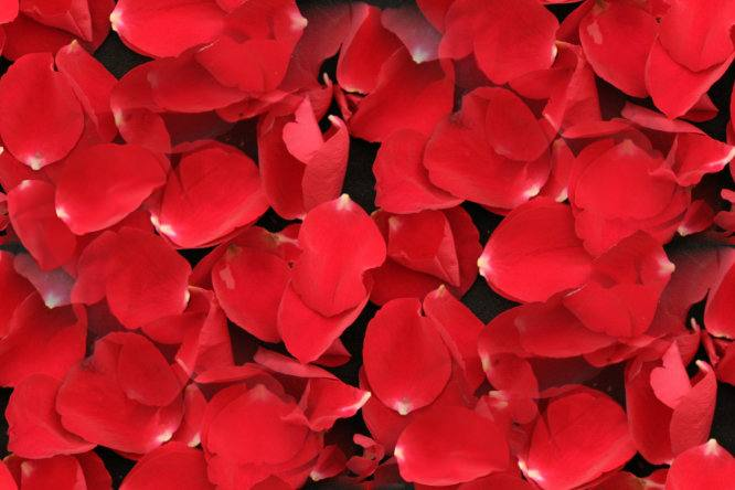 Red rose petals on black seamless repeating background fill