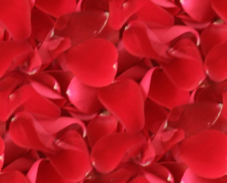 Red rose petals soft large seamless repeating background