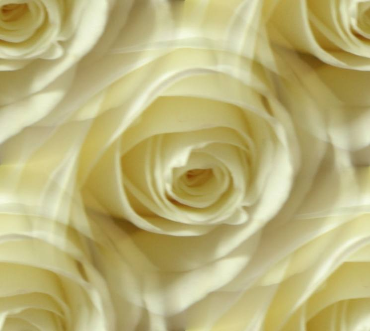 White rose dreamy seamless repeating background