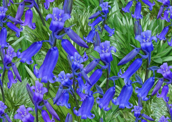 Large Bluebells Seamless Repeating Background Image