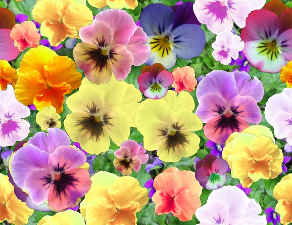 Pansies 2 Seamless Repeating Background Image