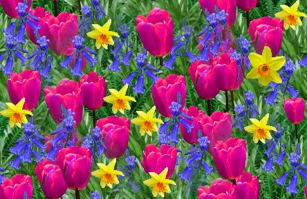 Spring Flowers Pink Tulips Seamless Repeating Background Image
